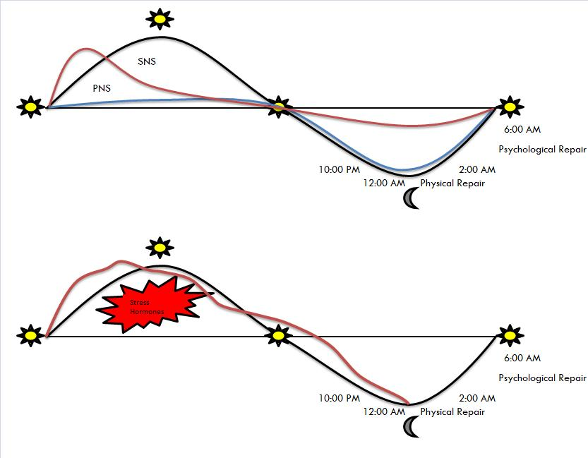 anabolic and catabolic state